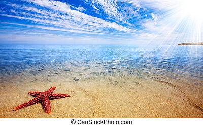 starfish, paradis