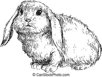 stram, kanin, hånd