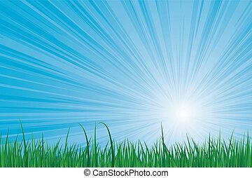 sunburst, græs, grønne