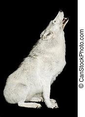 suse, ulv