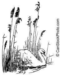 svane, fugl, stum