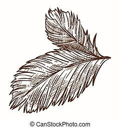 symbol, isoleret, nåle, branch, firtree, jul, ikon