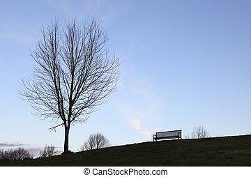 træ, bænk