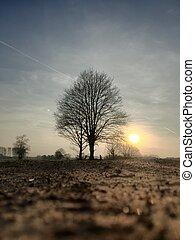 træ, bag efter, silhuet, solnedgang, landlige