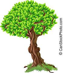 træ, illustration