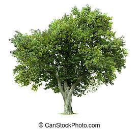 træ, isoleret, æble