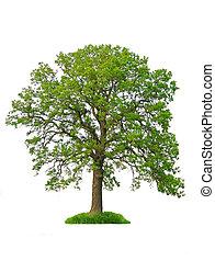 træ, isoleret
