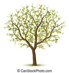 træ, leafage, grønne