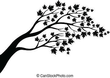 træ, silhuet, ahorn