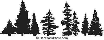 træ, silhuet, fyrre