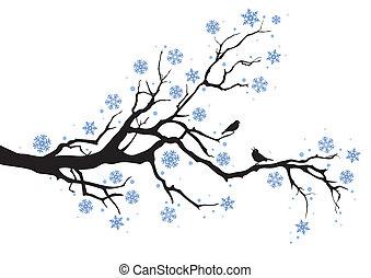 træ vinter, branch