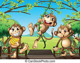 træagtig bro, tre, aber