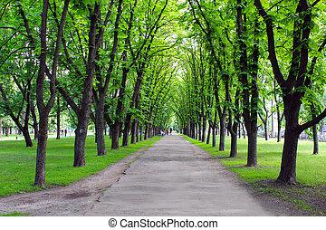 træer, park, grønne, mange, smukke