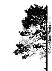 træer., silhuet