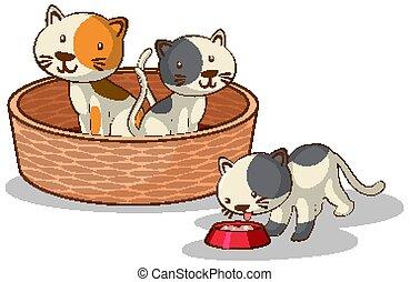 tre, baggrund, katte, hvid