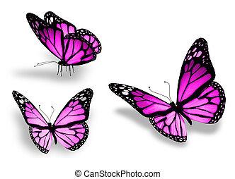 tre, isoleret, baggrund, violet, hvid, sommerfugl