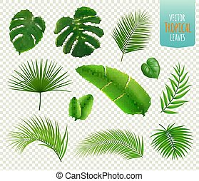 tropisk, blade, sæt