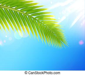 tropisk, sommer, baggrund