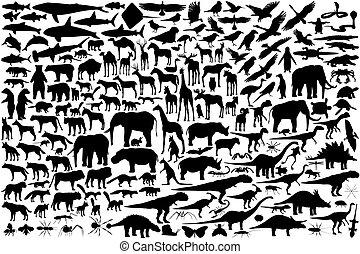 udkast, dyr