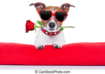 valentines, hund, dag