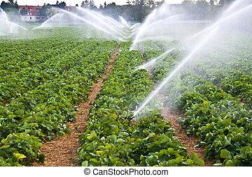 vand sprøjt, landbrug