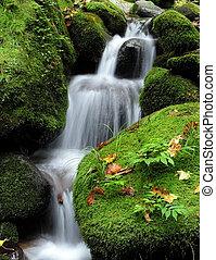 vandfald, skov