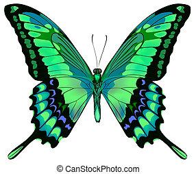 vektor, baggrund, sommerfugl, smukke, isoleret, hvid, blå grønnes, illustration