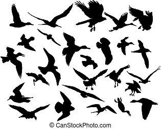 vektor, flyve, fugle