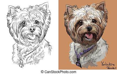 vektor, monochrome, portræt, affattelseen, yorkshire, hånd, farverig, terrier
