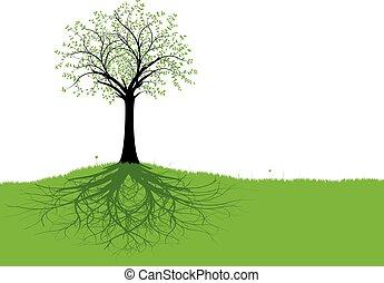vektor, træ, røder