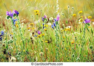 vild, felt, blomster, portugisisk