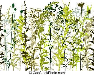 vild, planter, naturlig, weeds.