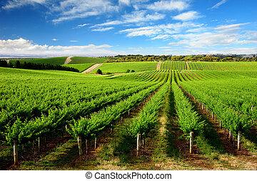 vingård, træ, høj, æn