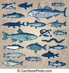 vinhøst, fish, sæt, (vector)