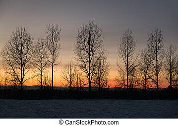 vinter, himmel, træer, bar, imod, solnedgang, række