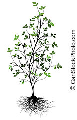 w, hen, træ, vektor, gree, rod
