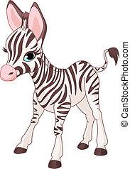zebra, cute, føl